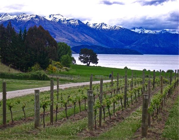 Biodynamics, Vineyards