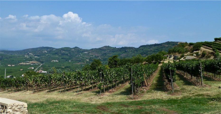 Coffele Castel Cerino