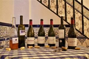 Tasting Mendoza wines