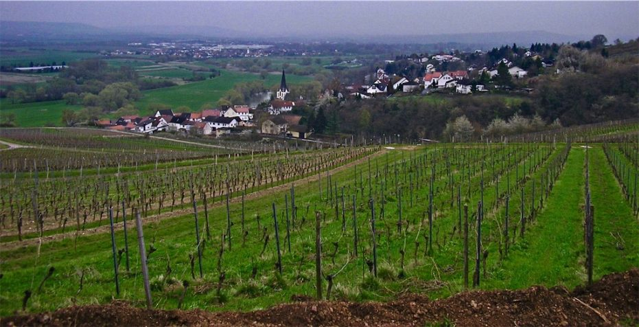 Tesch Riesling vineyards in the Nahe
