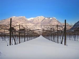 Tenuta San Leonardo, winter