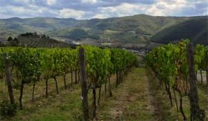 I Veroni, Chianti Rùfina DOCG, Pontassieve, Tuscany