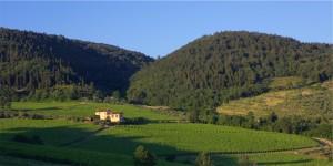 I Veroni Chianti Rùfina panorama