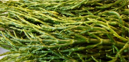 Fresh Samphire
