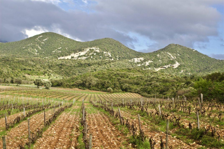The Patrimonio terroir, Orenga de Gaffory