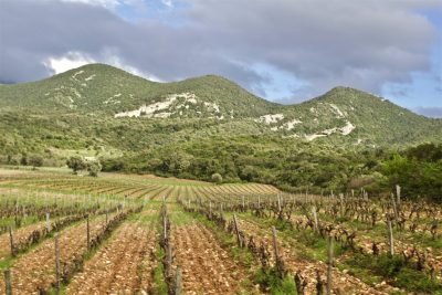 The Patrimonio terroir, Orenga de Gaffory