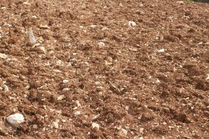 Red Clay soils in the Colli Berici