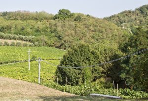 Typical terroir in the Colli Berici