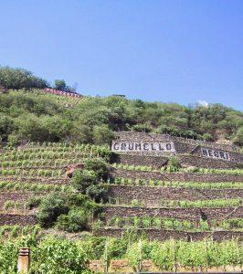 Valtellina Vineyard Terrace owners