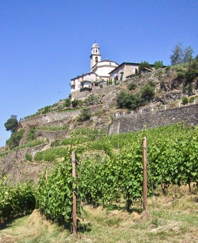Mountain Nebbiolo. Valtellina Inferno vineyards