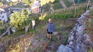 Backbreaking - The Valtellina Harvest