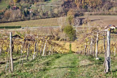 Grechetto Gentile in the Colli Bolognesi