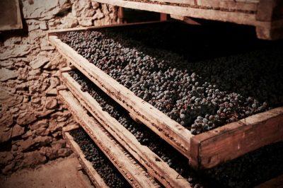 Drying Corvina Grapes