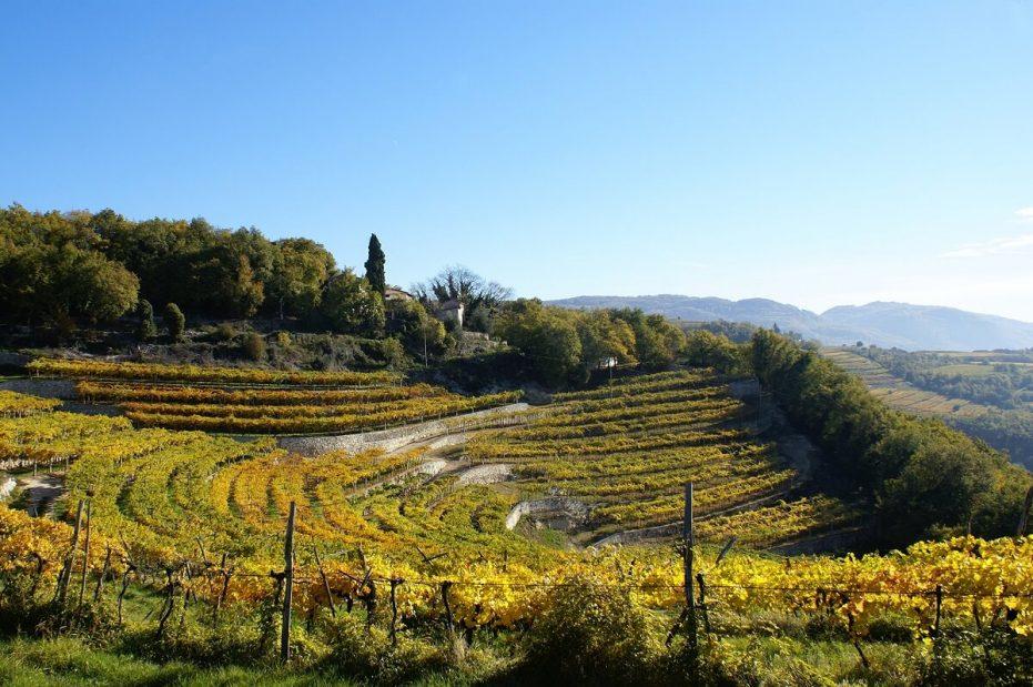 Valpolicella Marogne, aka Terraces