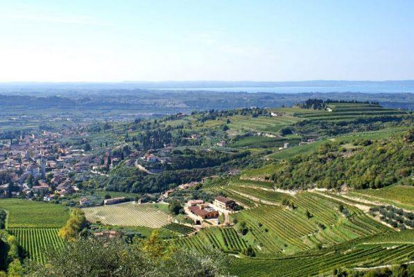 The diversity of the Sant'Ambrogio area in Valpolicella Classico