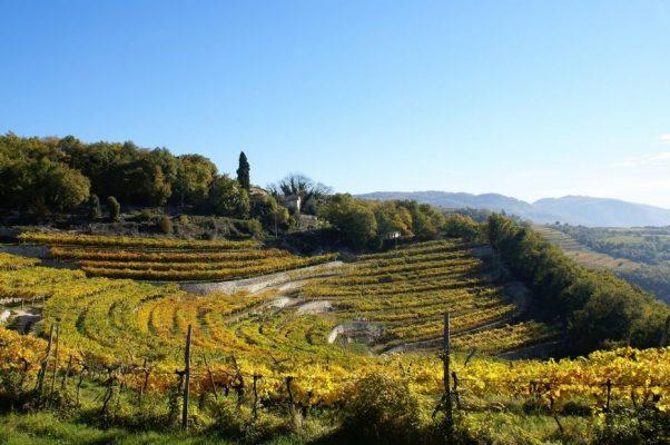 Valpolicella terraces, called Maronge