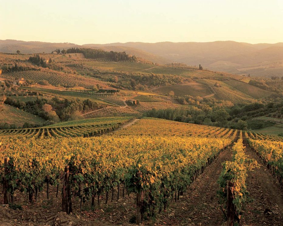 Tuscany: Fontodi Conca d'Oro