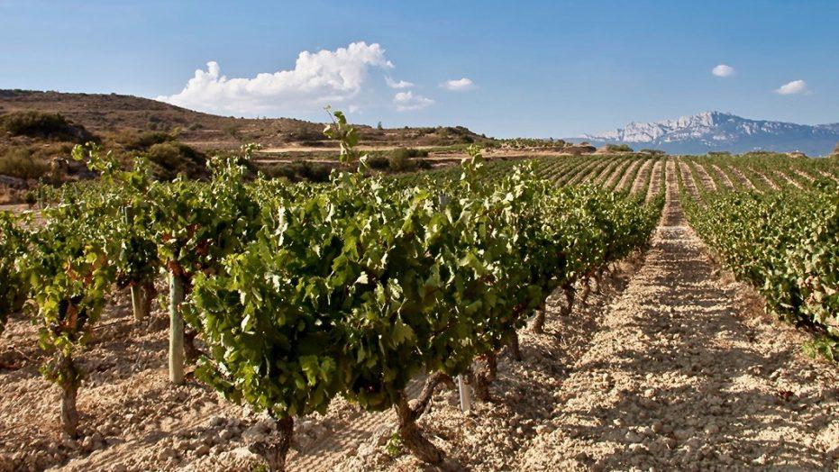 Bodegas Altanza Rioja Alta
