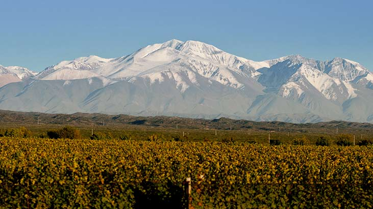 Argento Agrelo vineyards, Mendoza, Argentina