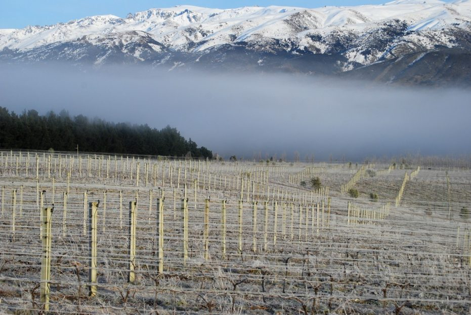 Maori Point Vineyard, Central Otago, New Zealand