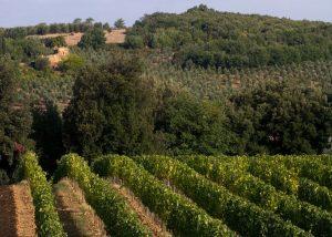 Manachiara Brunello di Montalcino