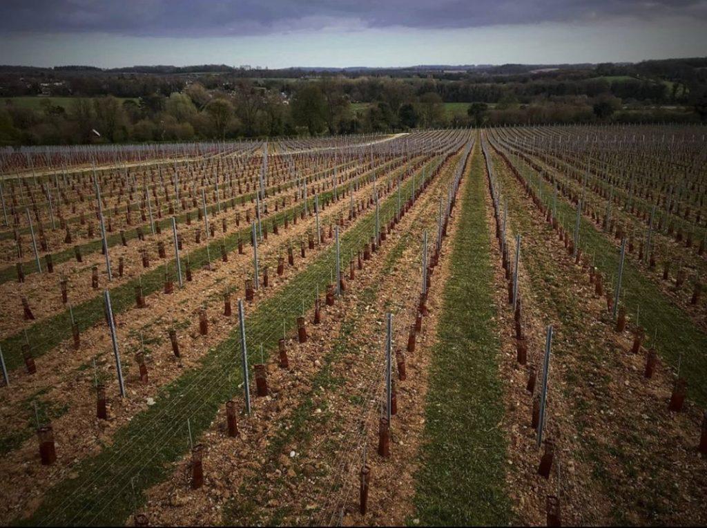 Louis Pommery England, Pinglestone vineyard