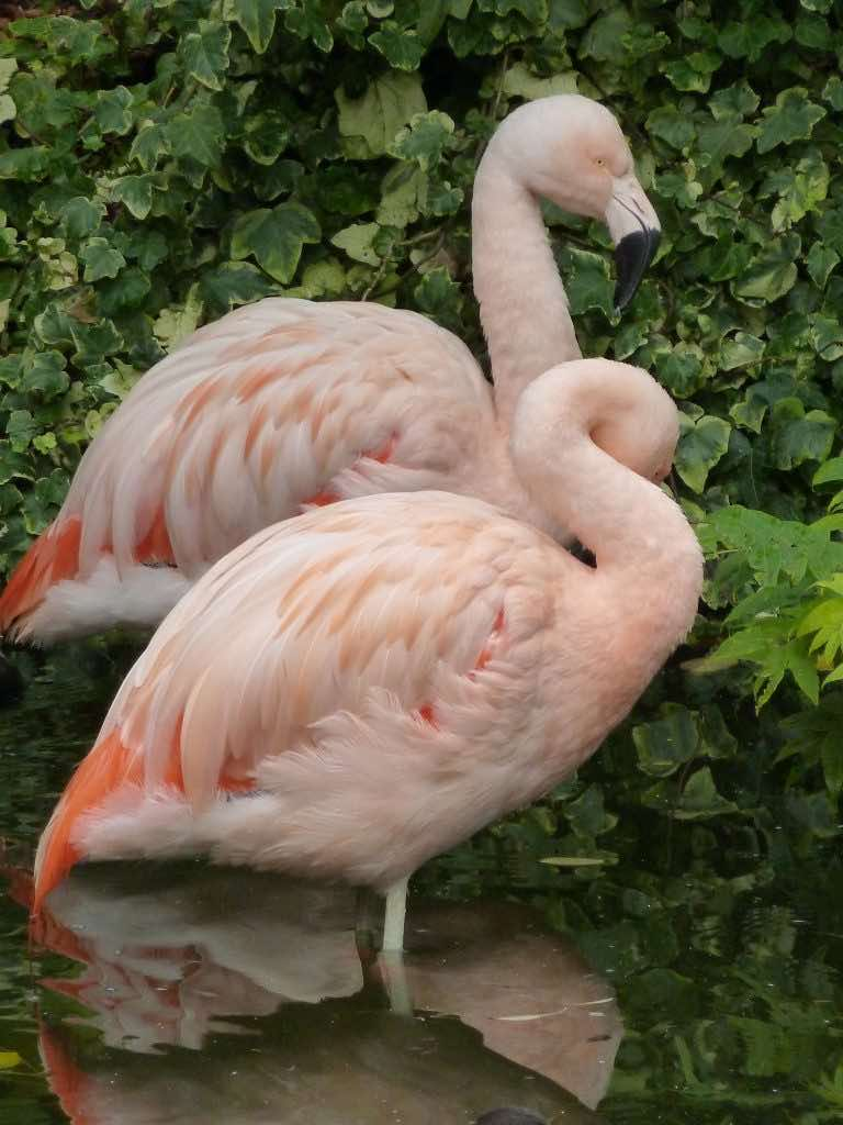Jerry Cornelius: Flamingoes resident at the Roof Gardens