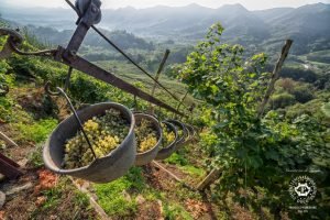 heroic_harvest_in_the_hills_of_conegliano_valdobbiadene_prosecco_superiore_docg_photo_credits_arcangelo_piai
