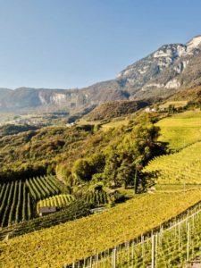 Kurtatsch Rosenmuskateller vineyards