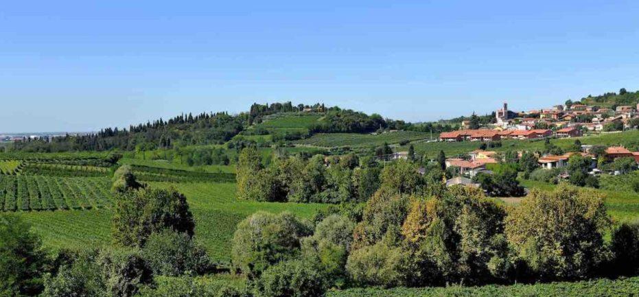 Typical Custoza Landscape